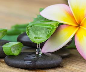 Aloe Vera has great Health Benfits